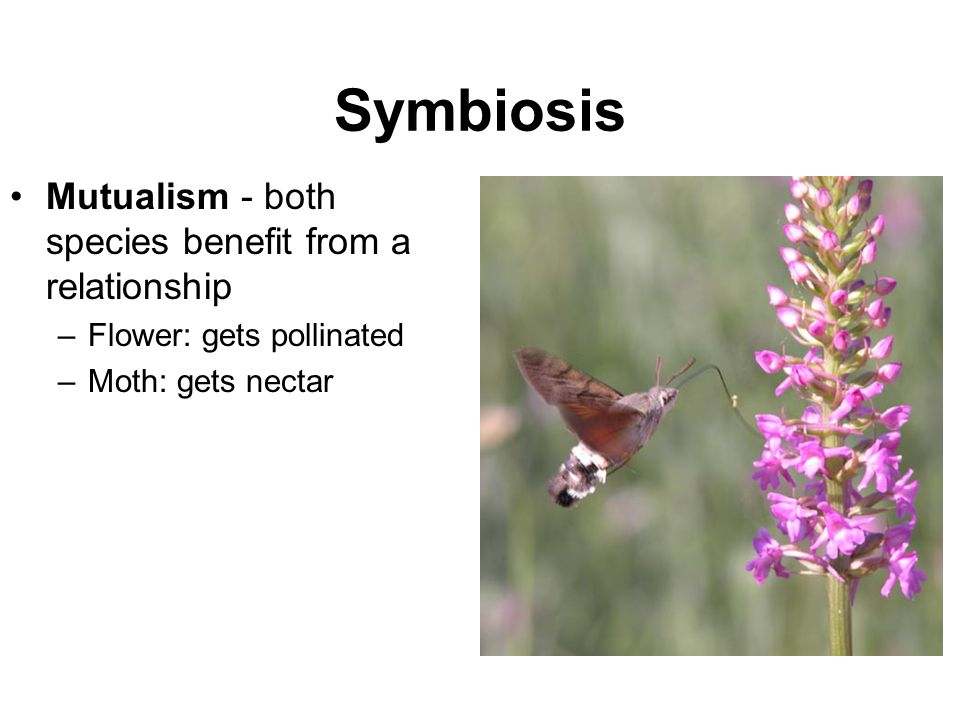 Symbiosis Mutualism - both species benefit from a relationship