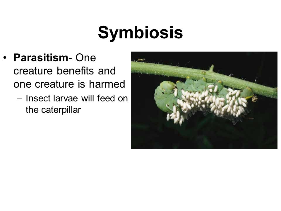 Symbiosis Parasitism- One creature benefits and one creature is harmed