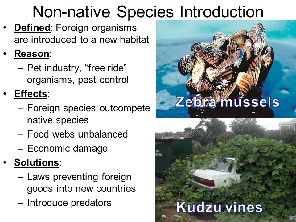 Non-native Species Introduction