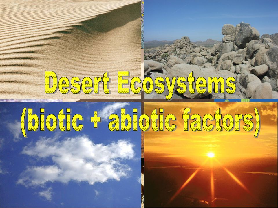 (biotic + abiotic factors)
