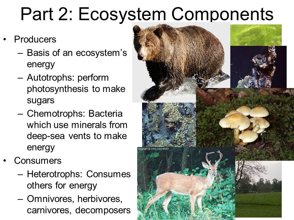 Part 2: Ecosystem Components