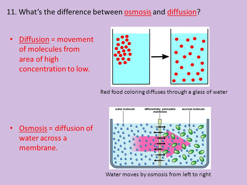 11. What's the difference between osmosis and diffusion