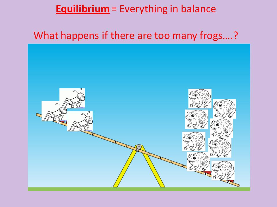 Equilibrium = Everything in balance What happens if there are too many frogs….