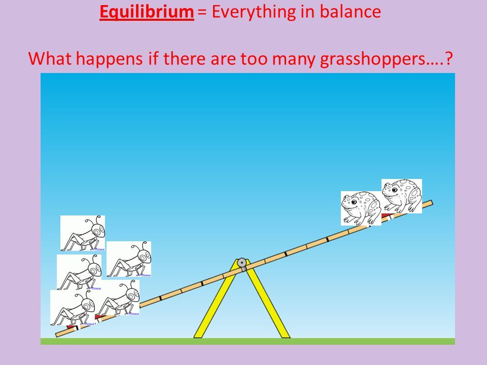 Equilibrium = Everything in balance What happens if there are too many grasshoppers….