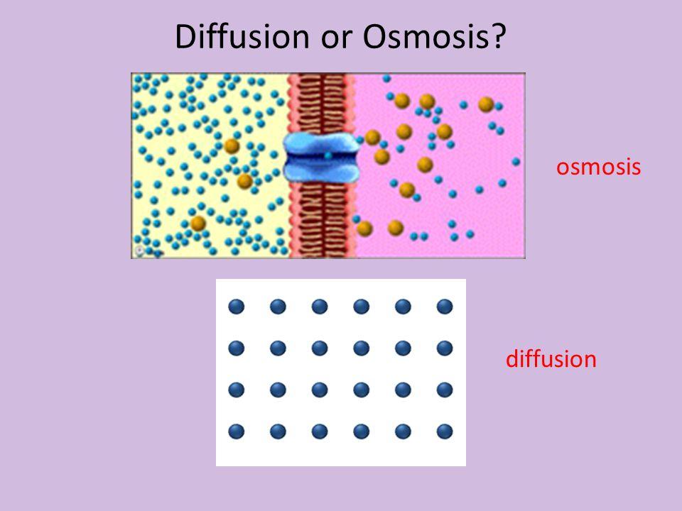 Diffusion or Osmosis osmosis diffusion