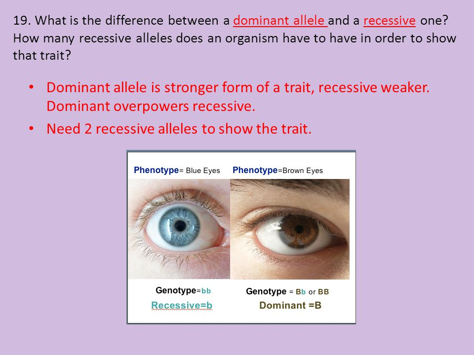 Need 2 recessive alleles to show the trait.