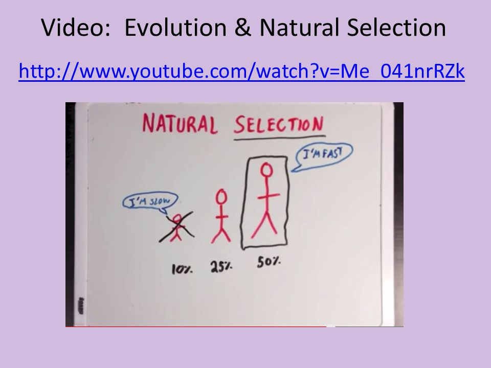 Video: Evolution & Natural Selection