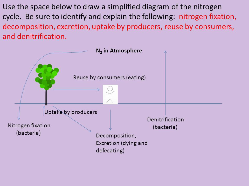 Use the space below to draw a simplified diagram of the nitrogen cycle