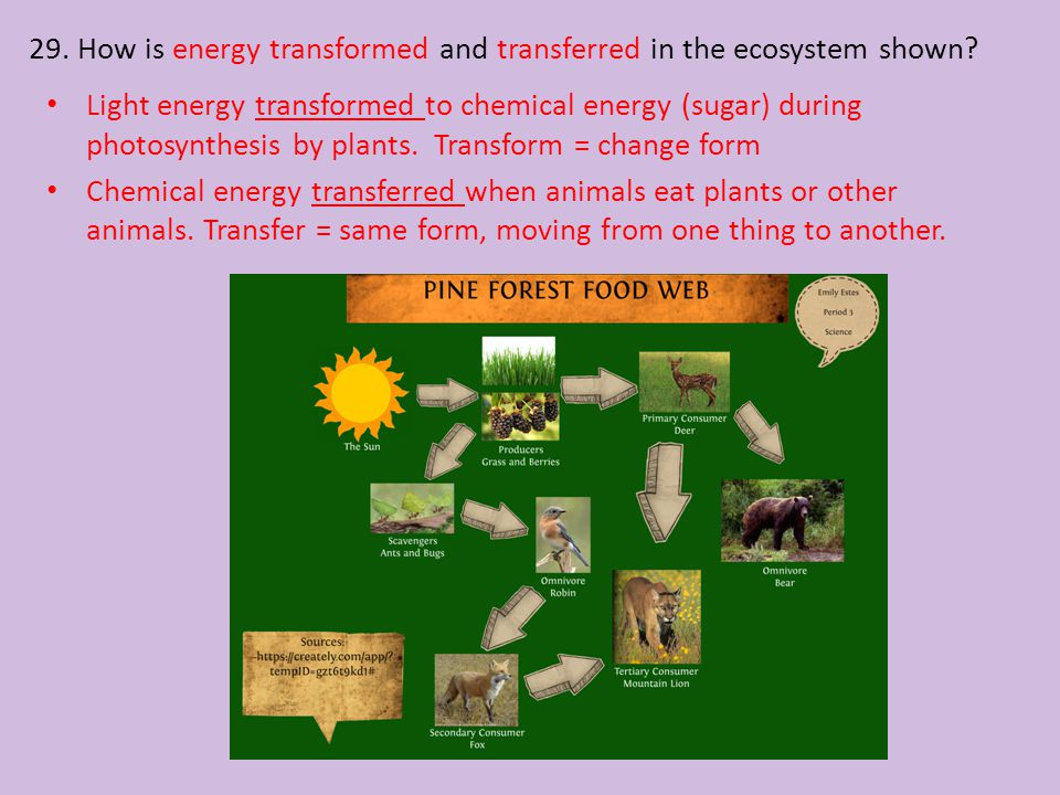 29. How is energy transformed and transferred in the ecosystem shown