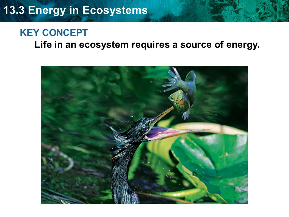 KEY CONCEPT Life in an ecosystem requires a source of energy.