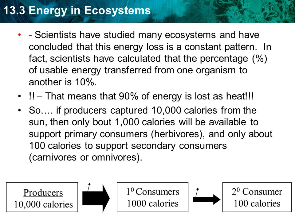 - Scientists have studied many ecosystems and have concluded that this energy loss is a constant pattern. In fact, scientists have calculated that the percentage (%) of usable energy transferred from one organism to another is 10%.