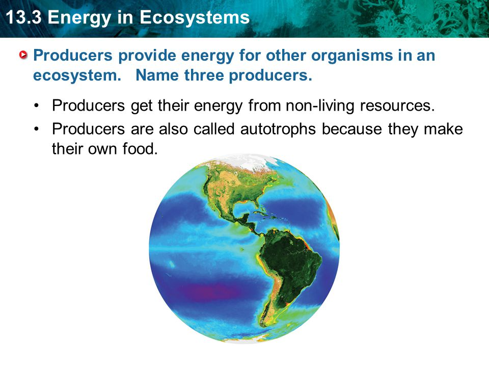 Producers provide energy for other organisms in an ecosystem