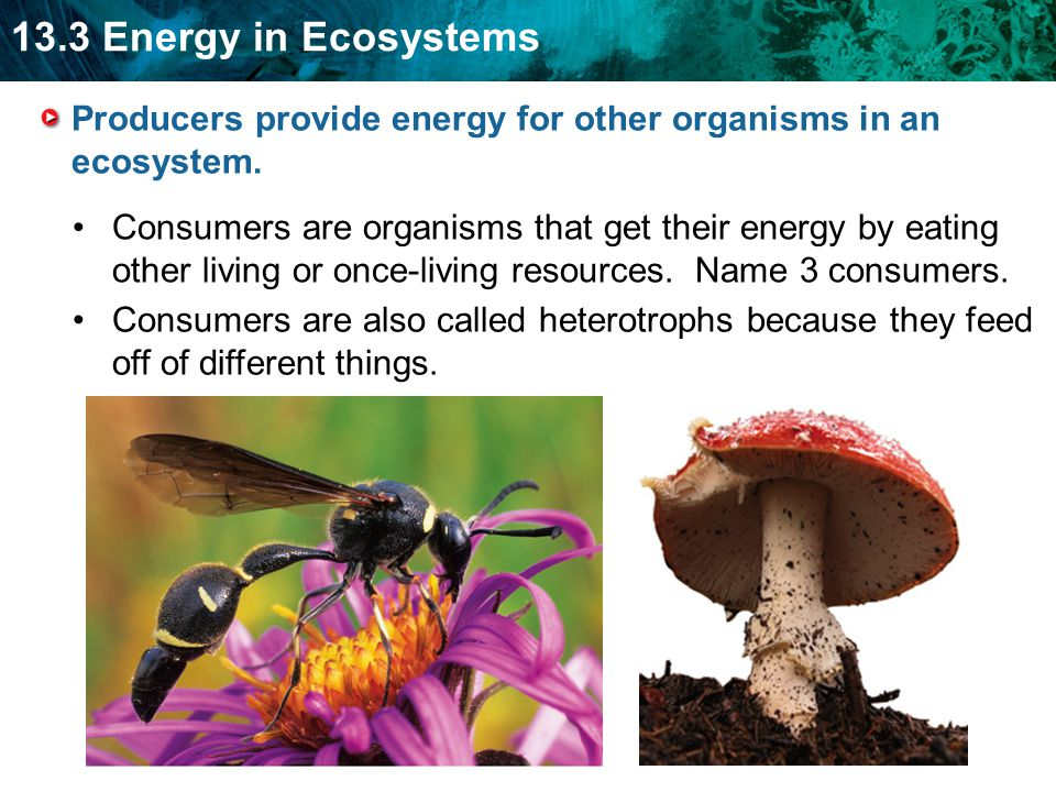 Producers provide energy for other organisms in an ecosystem.