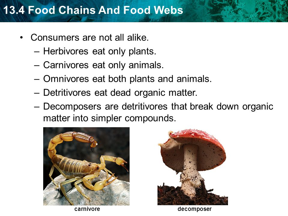 Consumers are not all alike. Herbivores eat only plants.