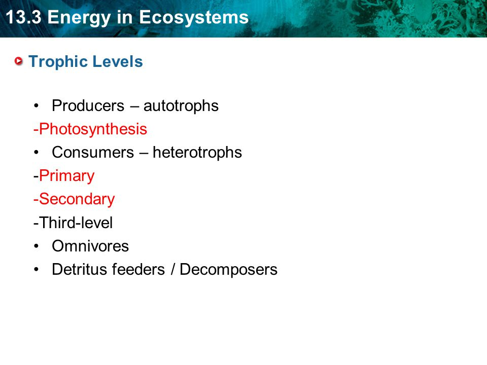 Trophic Levels Producers – autotrophs. -Photosynthesis. Consumers – heterotrophs. -Primary. -Secondary.
