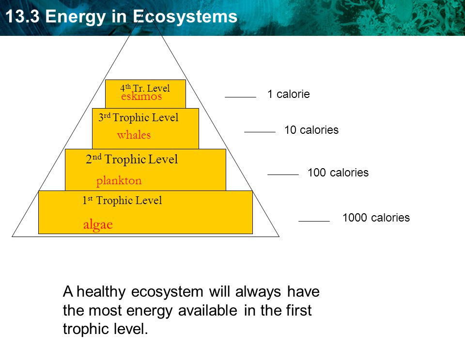 1st Trophic Level 2nd Trophic Level. 3rd Trophic Level. 4th Tr. Level. eskimos. 1 calorie. 10 calories.