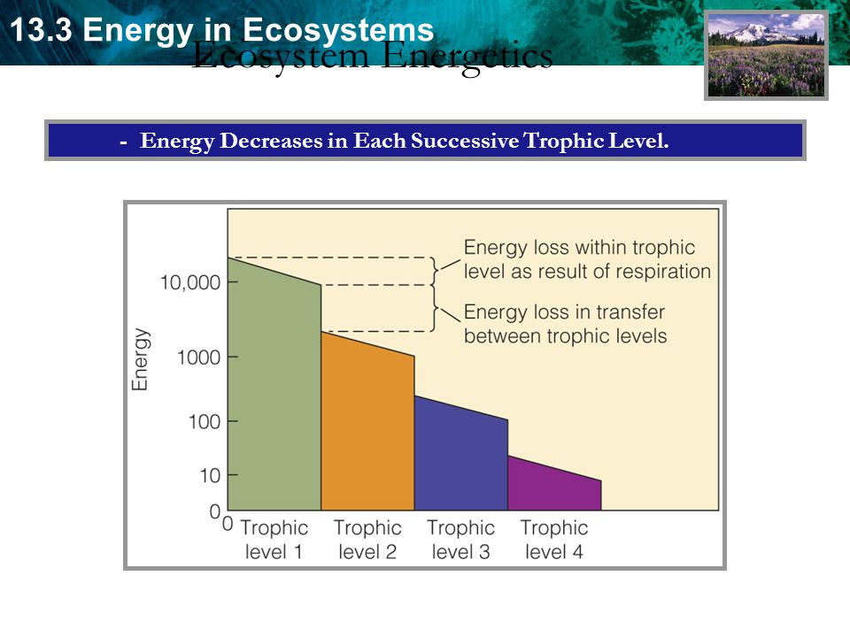 Ecosystem Energetics - Energy Decreases in Each Successive Trophic Level.