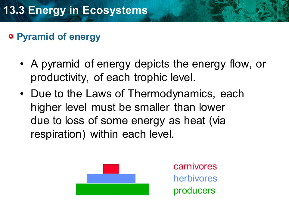 Pyramid of energy A pyramid of energy depicts the energy flow, or productivity, of each trophic level.