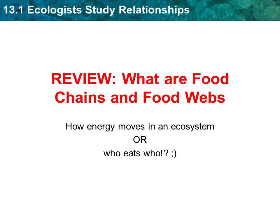 REVIEW: What are Food Chains and Food Webs