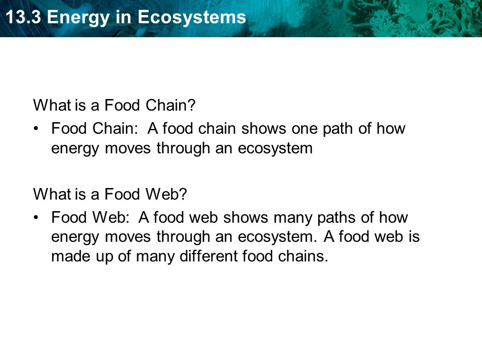 What is a Food Chain Food Chain: A food chain shows one path of how energy moves through an ecosystem.