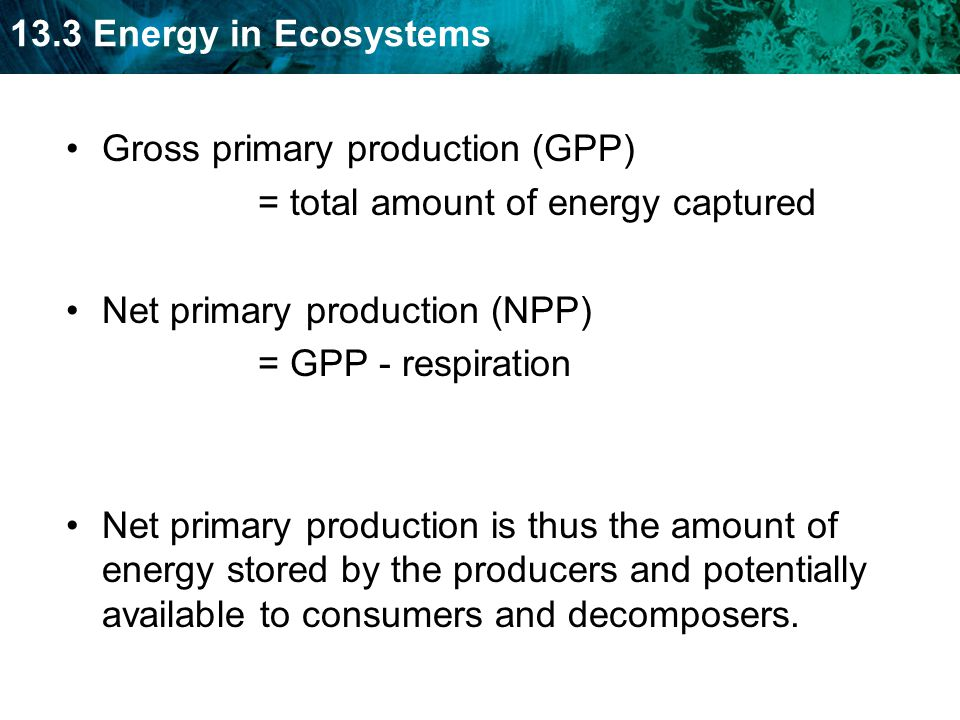 Gross primary production (GPP)