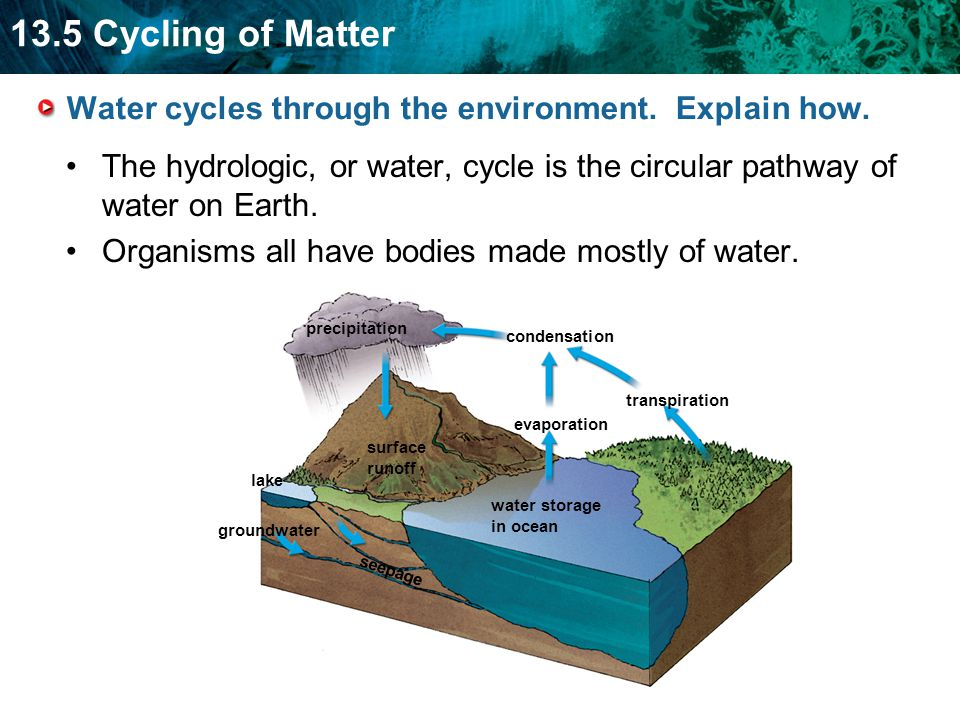 Water cycles through the environment. Explain how.