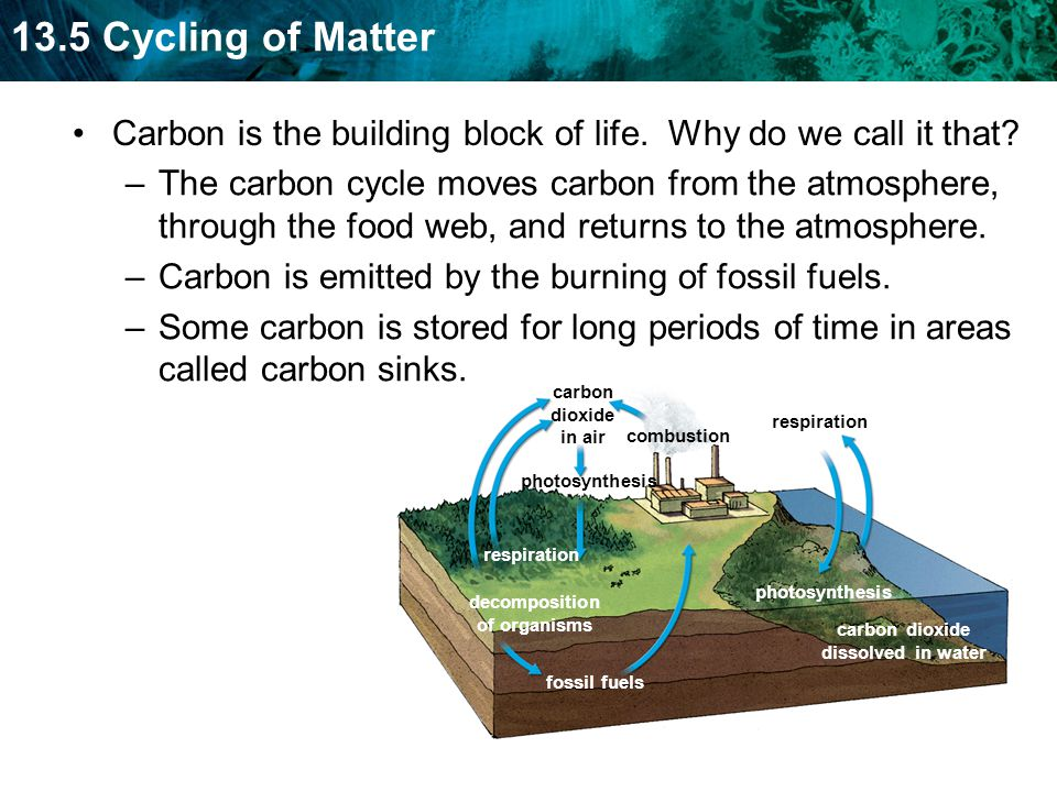 Carbon is the building block of life. Why do we call it that