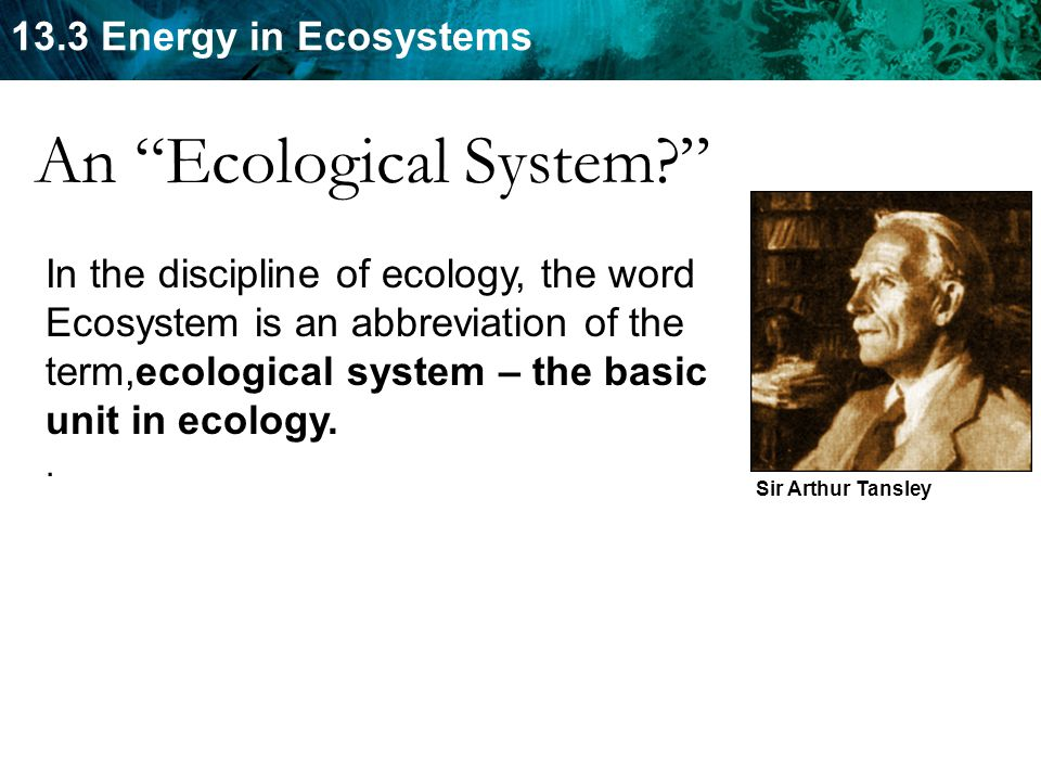 An Ecological System