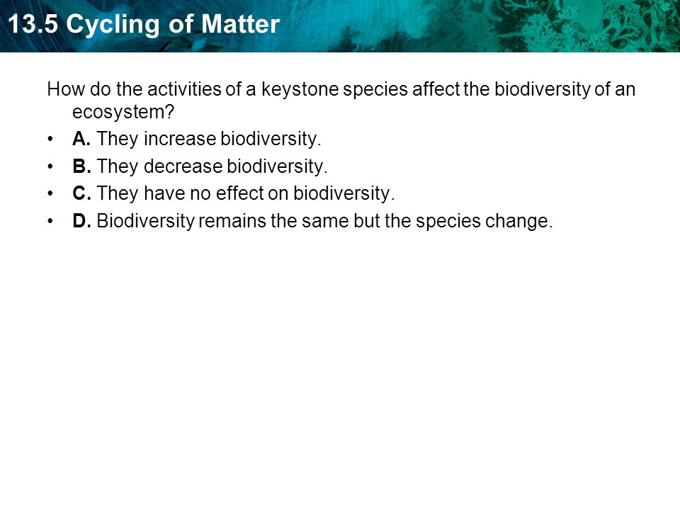 How do the activities of a keystone species affect the biodiversity of an ecosystem
