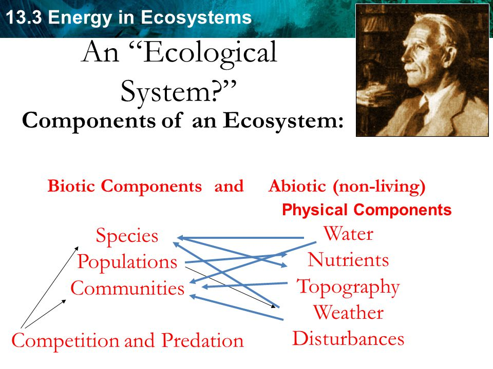 An Ecological System Components of an Ecosystem: Water Species