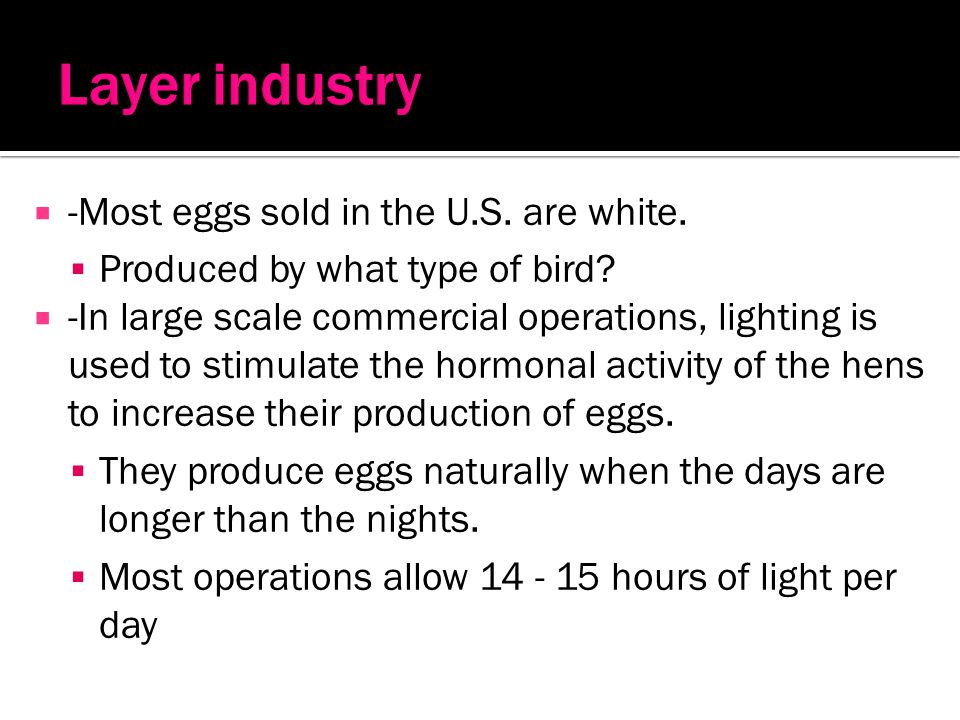 Layer industry -Most eggs sold in the U.S. are white.