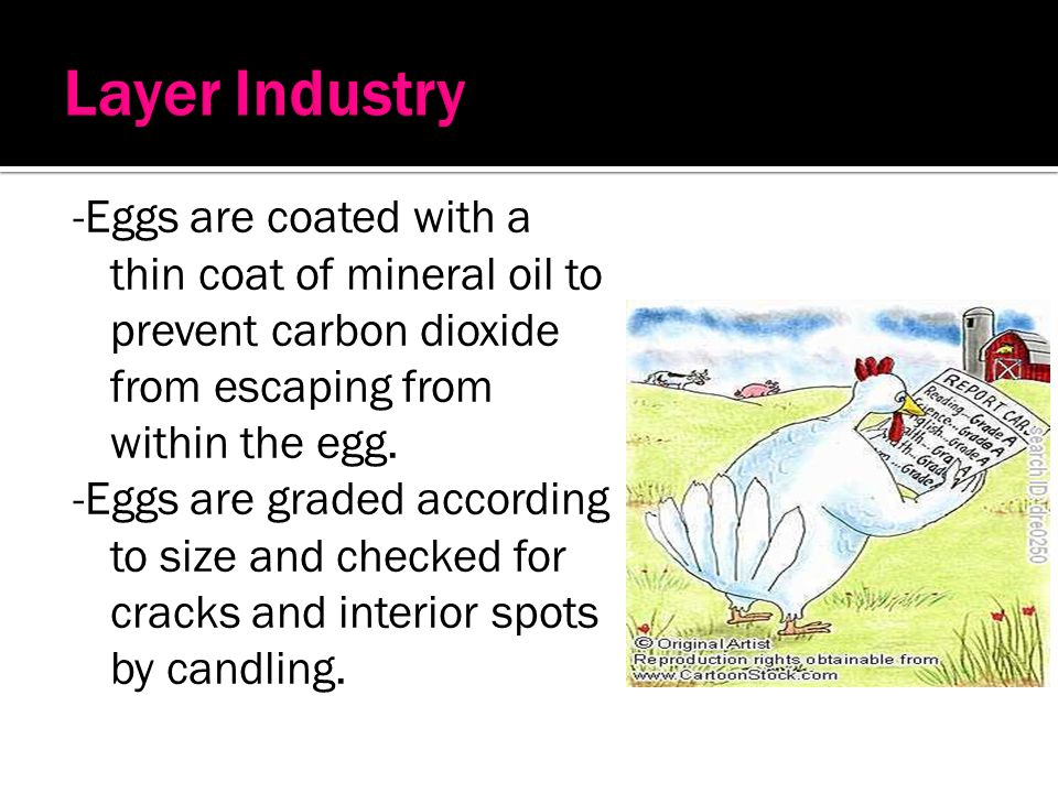 Layer Industry -Eggs are coated with a thin coat of mineral oil to prevent carbon dioxide from escaping from within the egg.