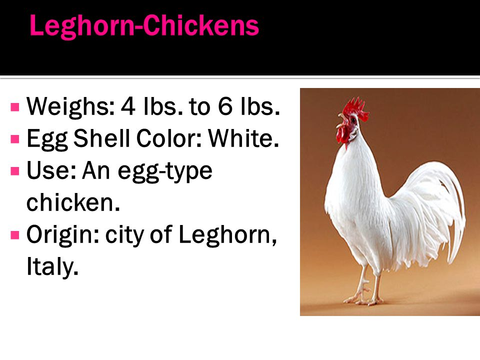 Leghorn-Chickens Weighs: 4 lbs. to 6 lbs. Egg Shell Color: White.