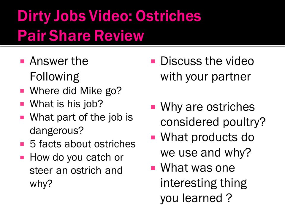 Dirty Jobs Video: Ostriches Pair Share Review