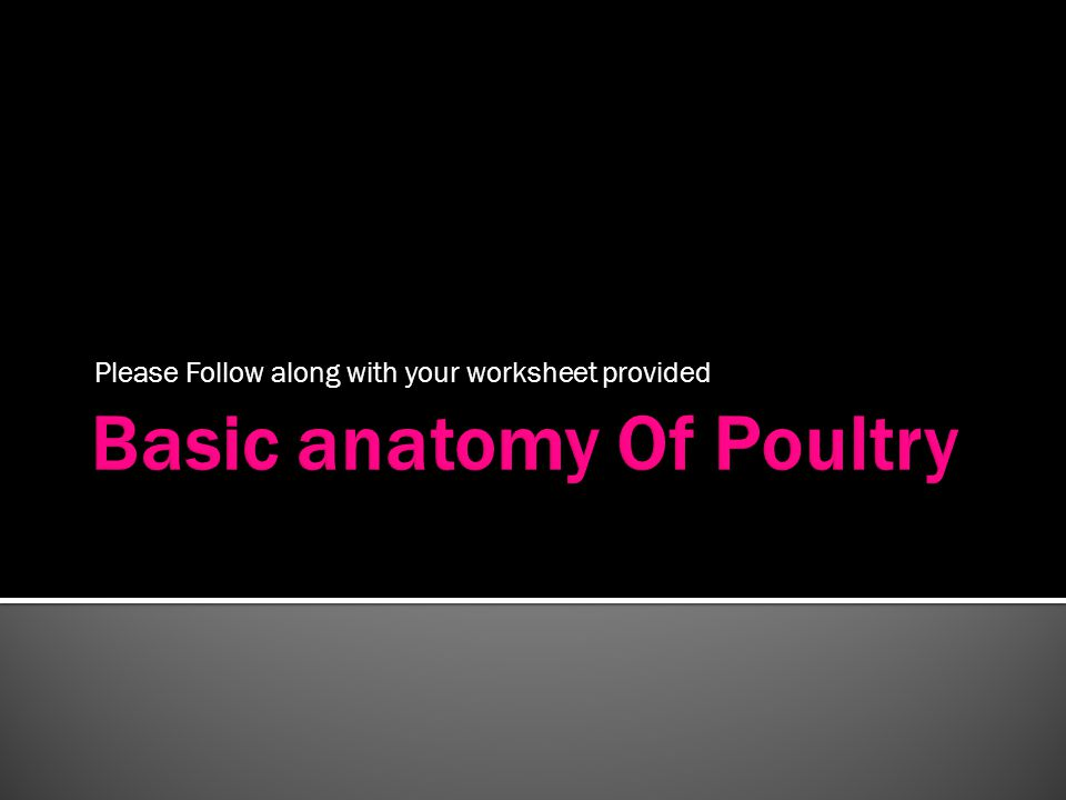Basic anatomy Of Poultry