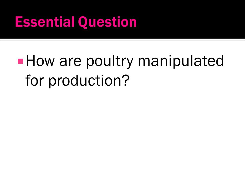 How are poultry manipulated for production