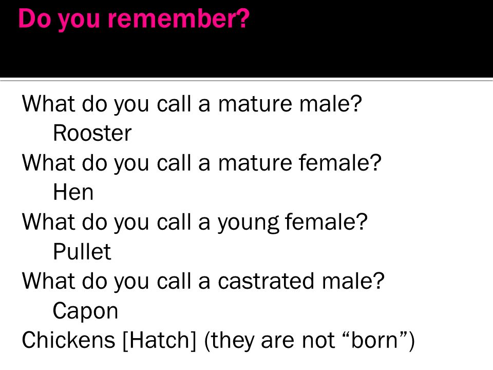 Do you remember What do you call a mature male Rooster