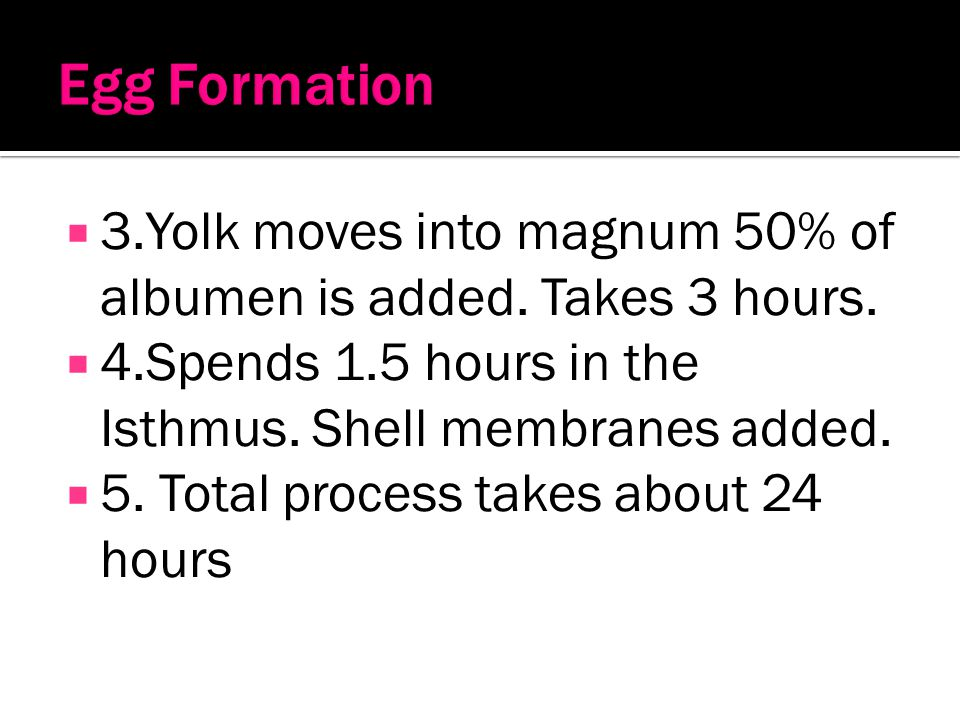 Egg Formation 3.Yolk moves into magnum 50% of albumen is added. Takes 3 hours. 4.Spends 1.5 hours in the Isthmus. Shell membranes added.