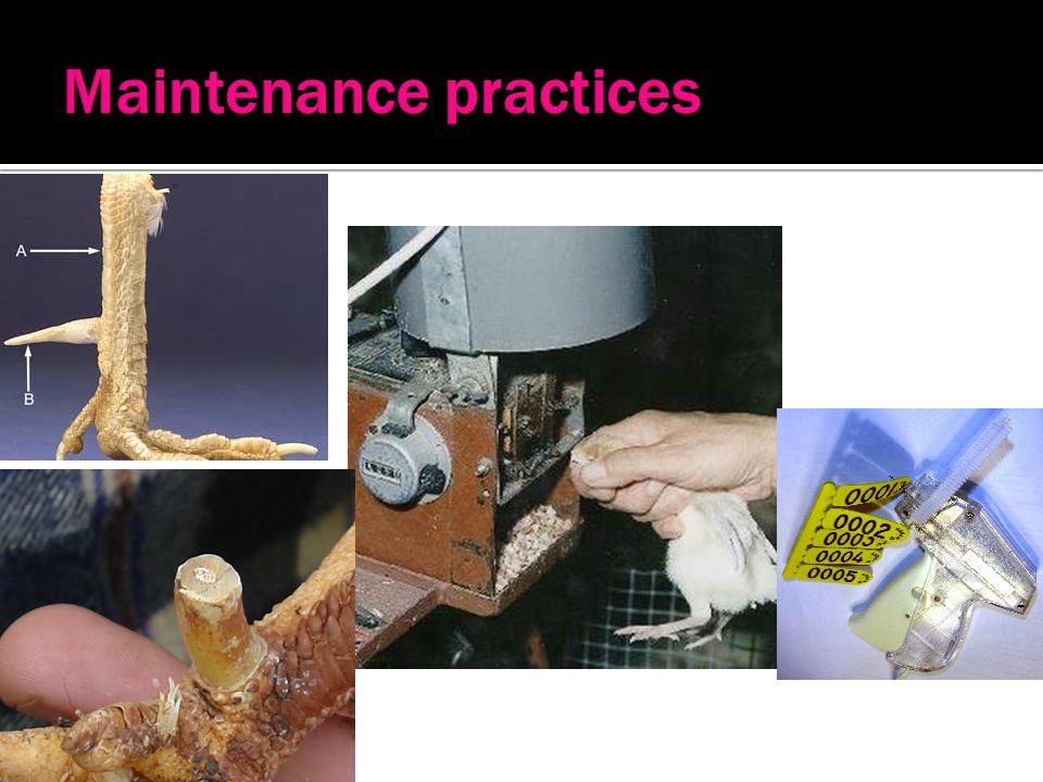 Maintenance practices