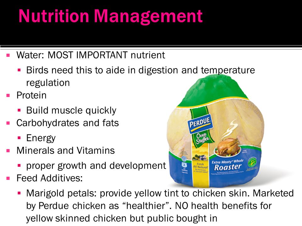 Nutrition Management Water: MOST IMPORTANT nutrient