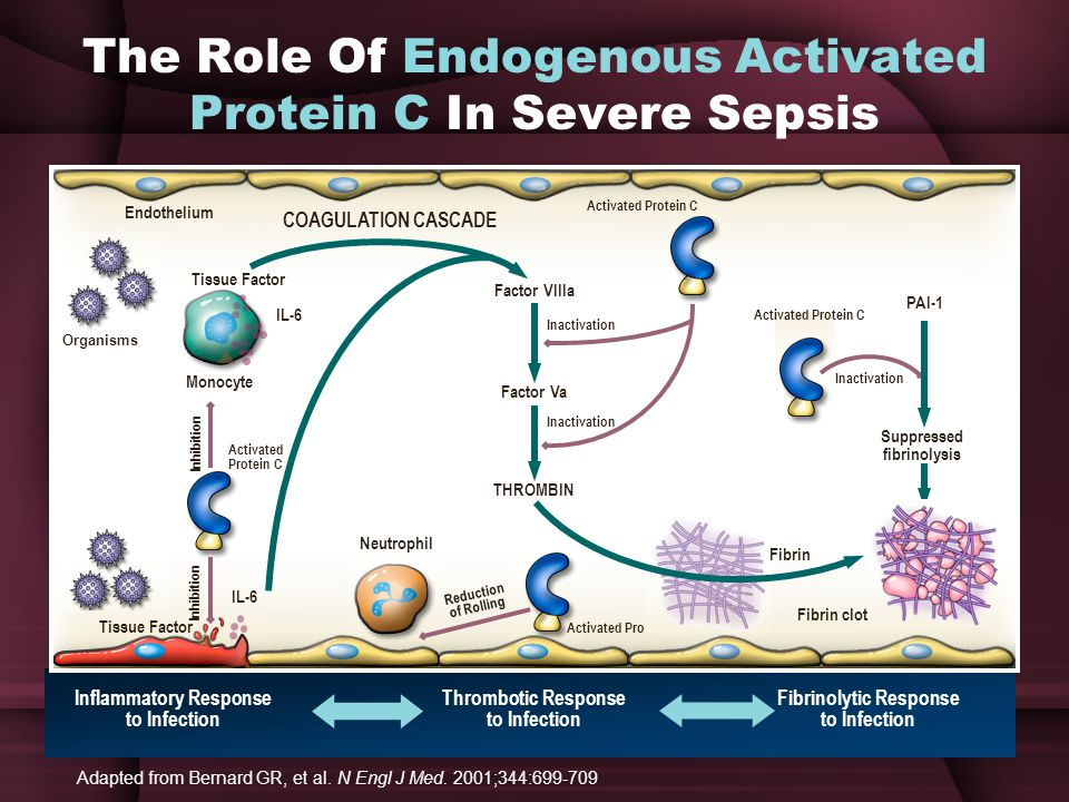 The Role Of Endogenous Activated Protein C In Severe Sepsis