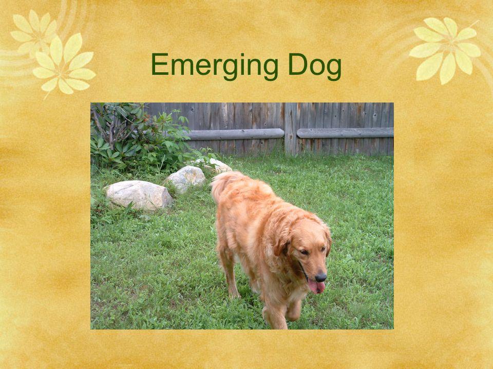 Emerging Dog
