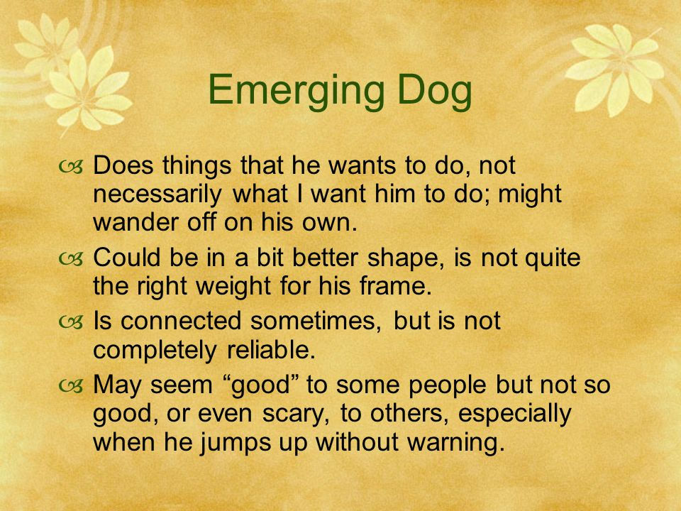 Emerging Dog Does things that he wants to do, not necessarily what I want him to do; might wander off on his own.
