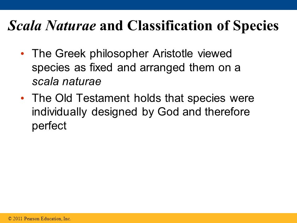 Scala Naturae and Classification of Species