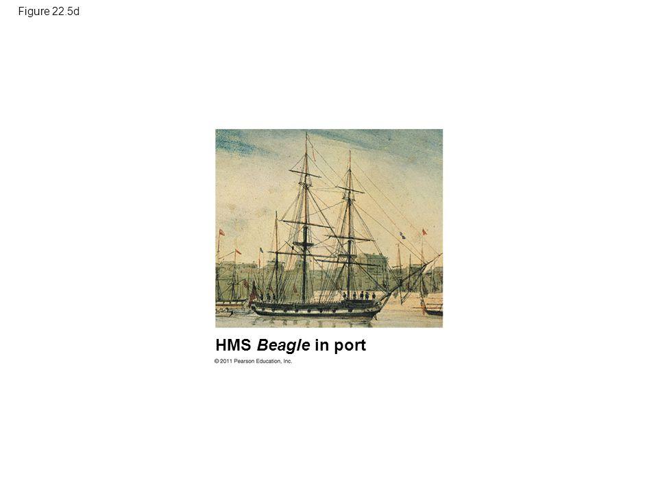 Figure 22.5d Figure 22.5 The voyage of HMS Beagle. HMS Beagle in port