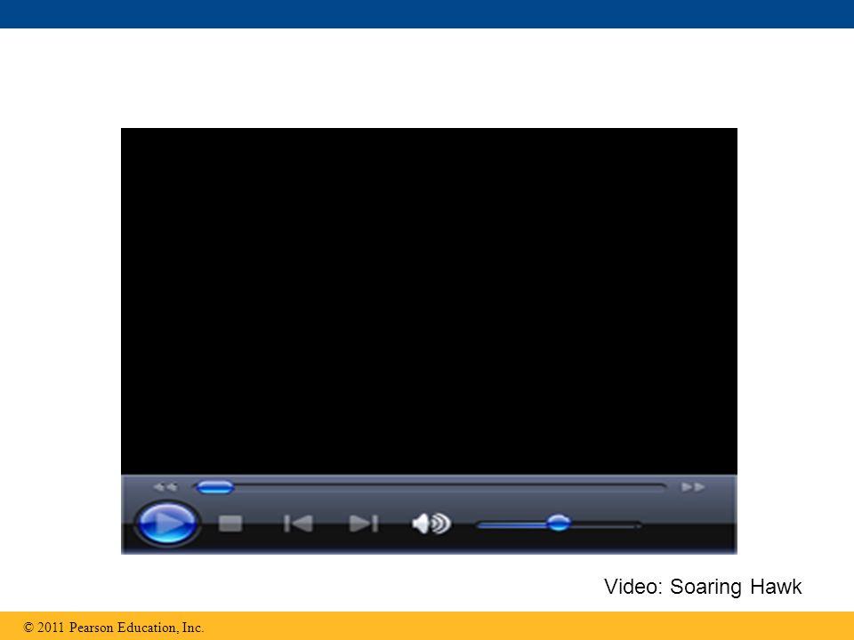 Video: Soaring Hawk © 2011 Pearson Education, Inc. 33