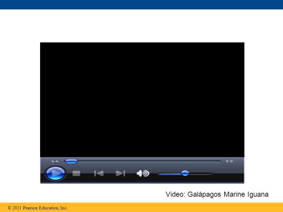 Video: Galápagos Marine Iguana