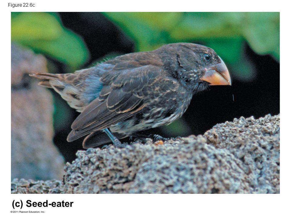 (c) Seed-eater Figure 22.6c