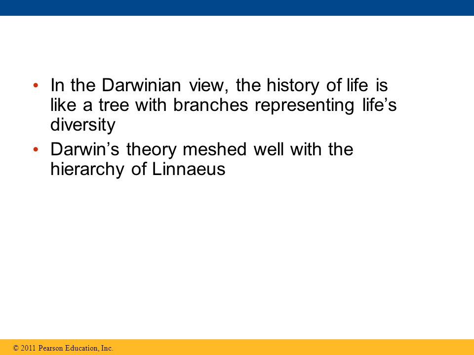 Darwin's theory meshed well with the hierarchy of Linnaeus