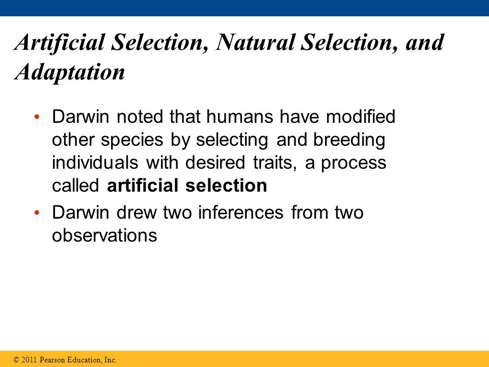 Artificial Selection, Natural Selection, and Adaptation